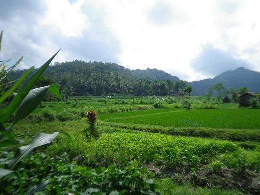 organic-farm3