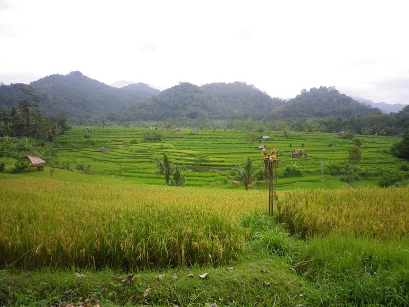 sidemen_rice_paddies_01