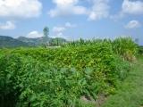 organic-farm2