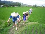 paddy-walk